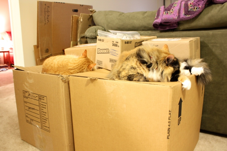 What Nori and Mini did while we packed up the apt...